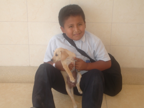 Boy brings his puppy gypsy for check up